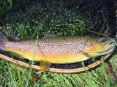 A fat brown trout well worth the miles of floating.