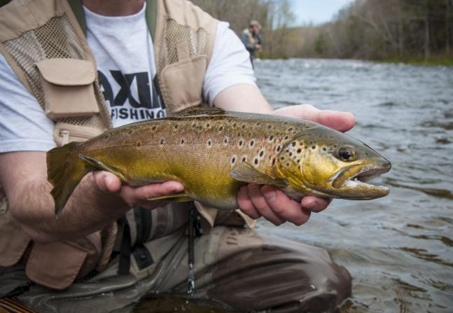 F&S Hook Shots, Episode 3, Season 6: Trout Lessons From The Mealie Master