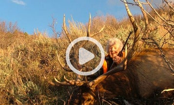 Video: 82-Year-Old Woman Harvests Monster Bull Elk