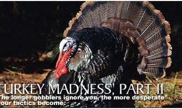 Turkey Madness Part II: The Silent Treatment