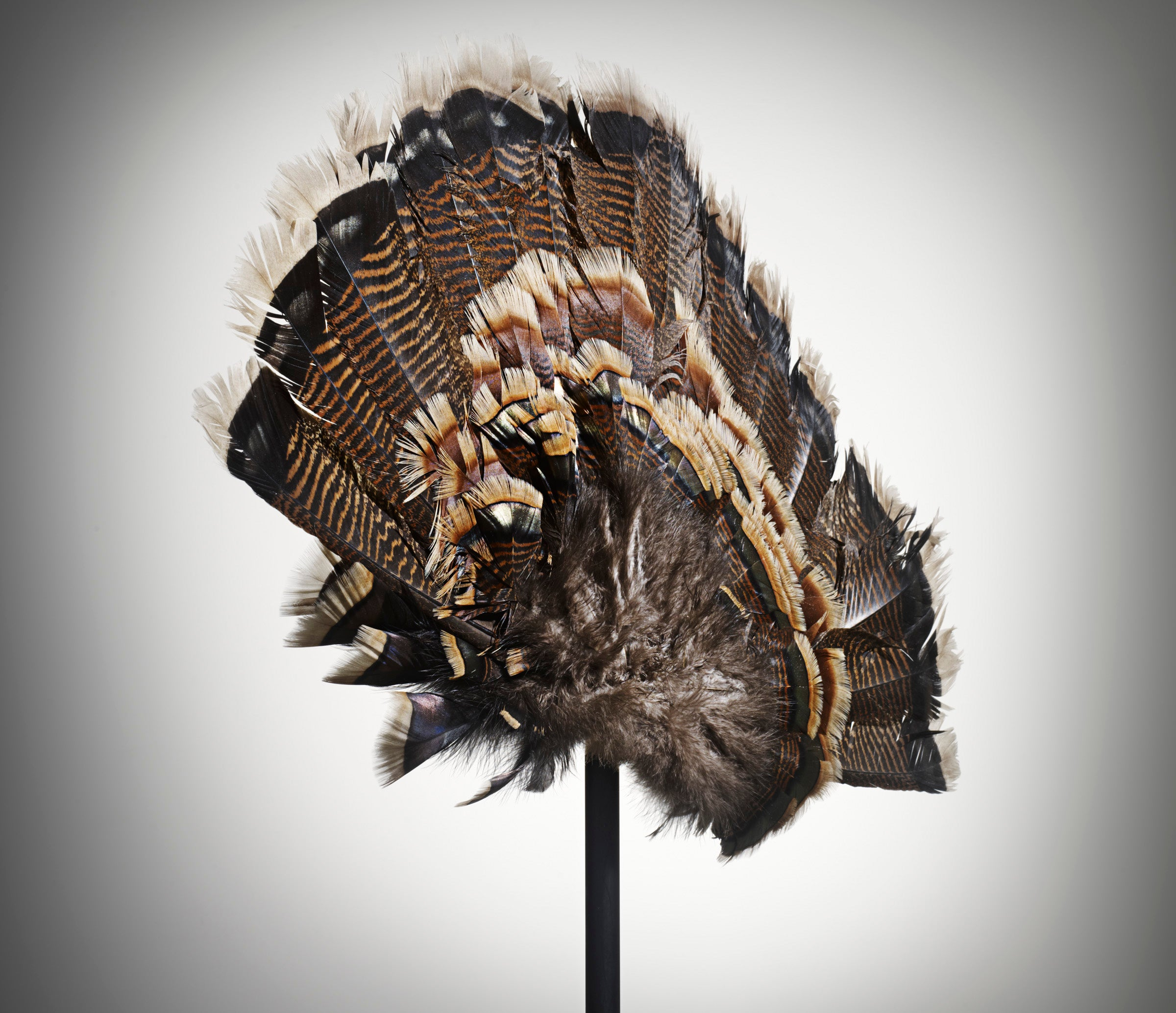 How To Make A Turkey Fan Decoy