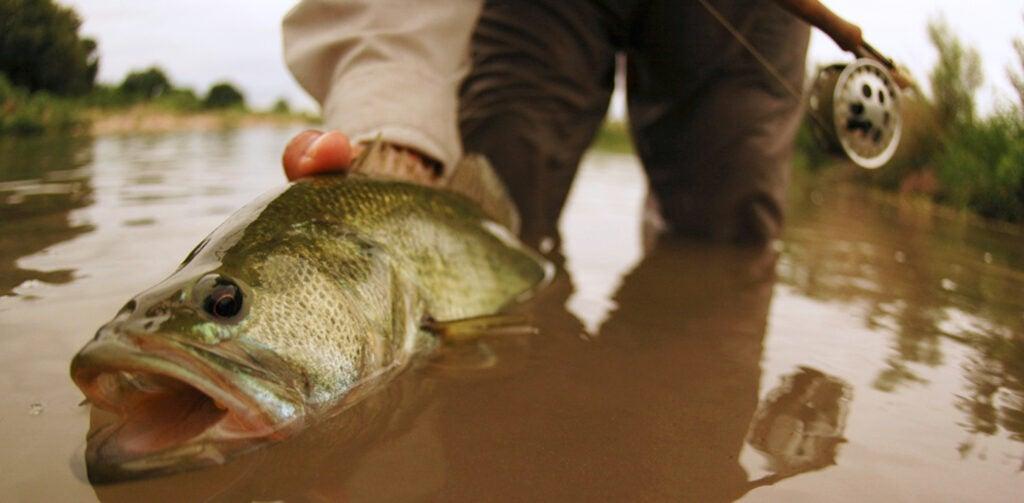 sinking line bass