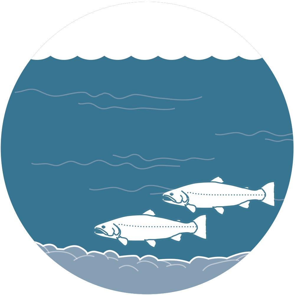 Bottom dwelling trout