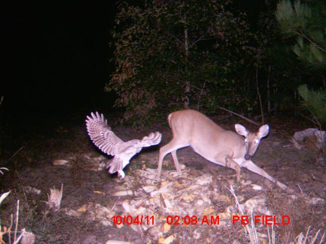 The 50 Best Photos from Round II of the 2011 F&S Fall Trail Cam Contest