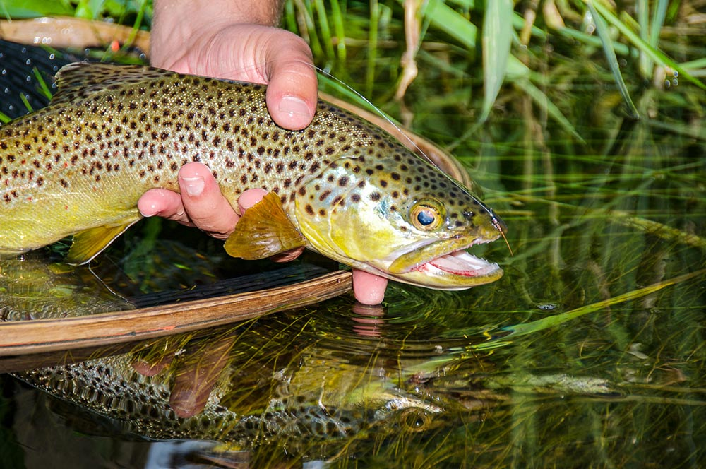 Trout Fly Rod Buying Guide $80-$325