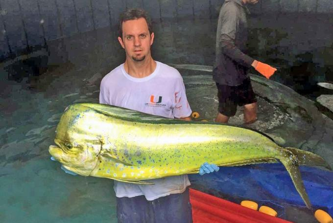 Mahi Packs On 50 Pounds In Nine Months