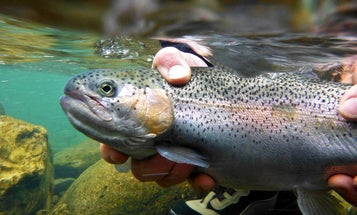Field and Stream Guide: 50 Ways to Catch Spring Trout