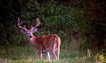 10 Early Season Deer-Hunting Tips For Bagging a Monster