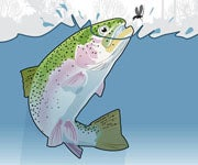 Dissect Trout Surface Feeding Behavior And Choose Flies They Can't Resist