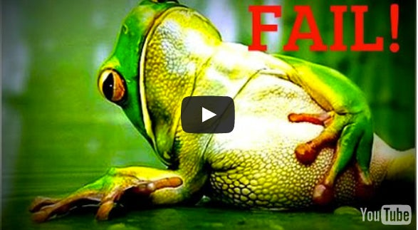 How To Never Miss A Bass On A Frog Again