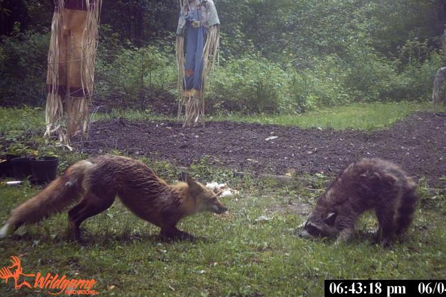 The 35 Best Photos From Our Spring Trail Cam Contest (Round III)