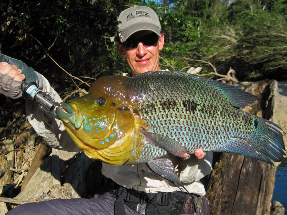 httpswww.fieldandstream.comsitesfieldandstream.comfilesimport2014importImage2011photo38356Linares_turquoise_cichlid.jpg