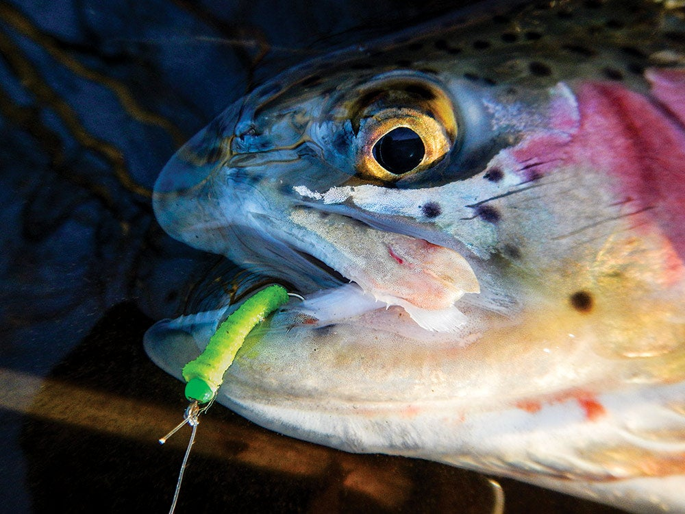 fishing, trout fishing, bait, trout, summer fishing, joe cermele