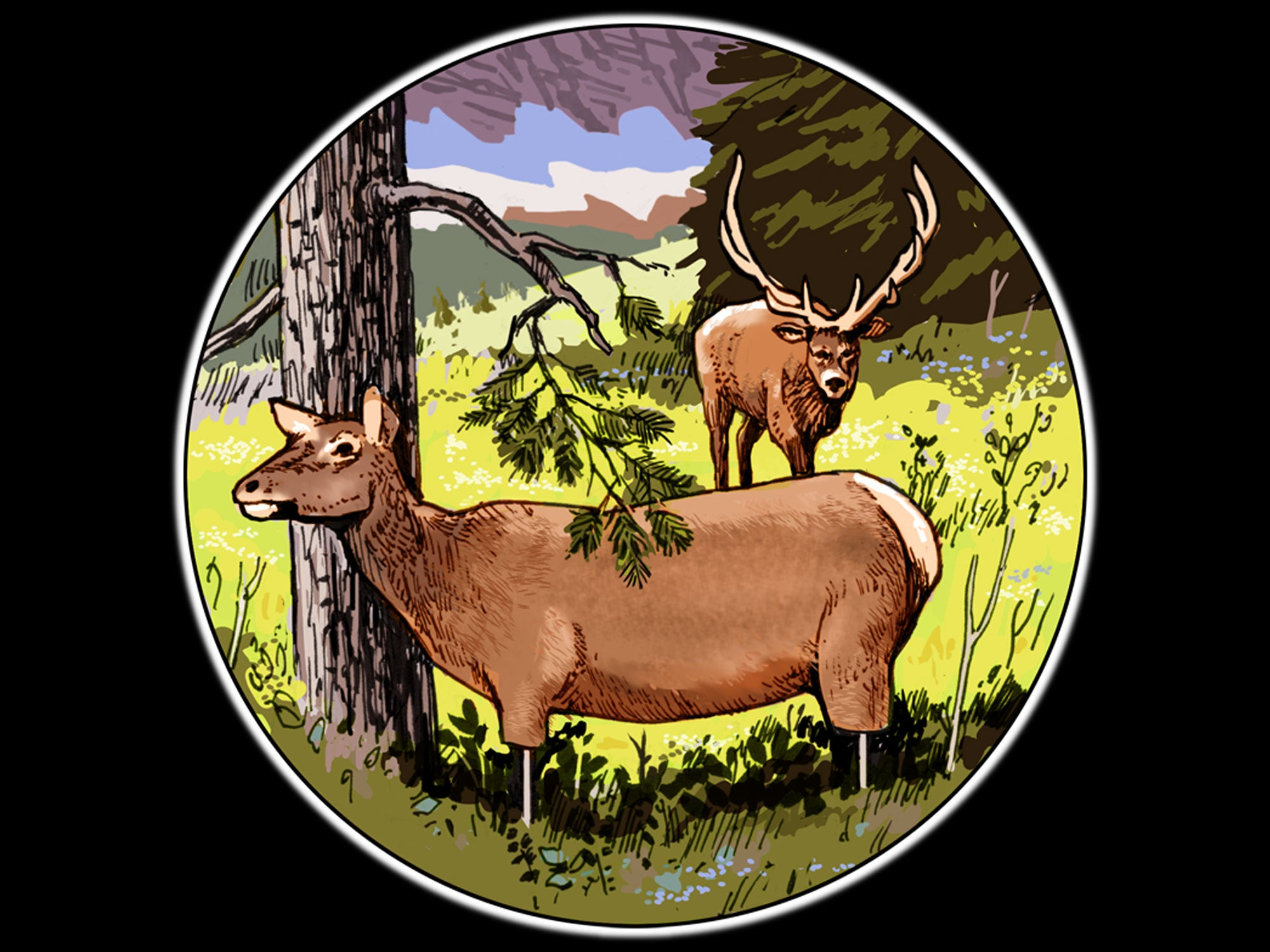 elk decoy tactics