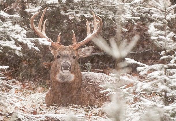 Late-Season Bucks: Target Draws and Valleys on Cold, Windy Days