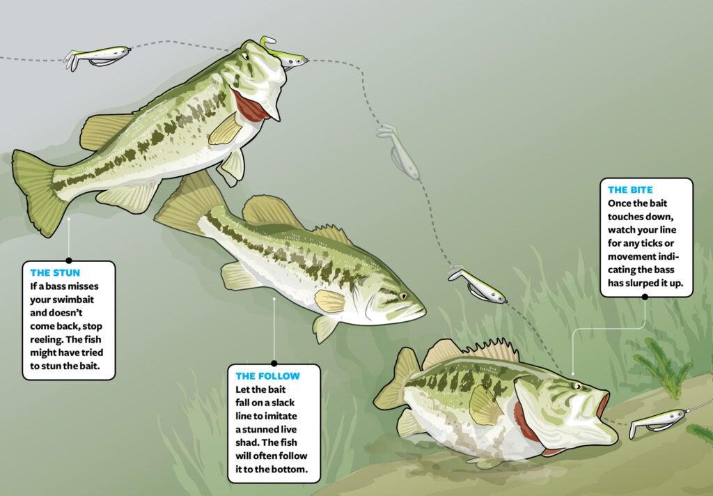 swimbait bass tactics