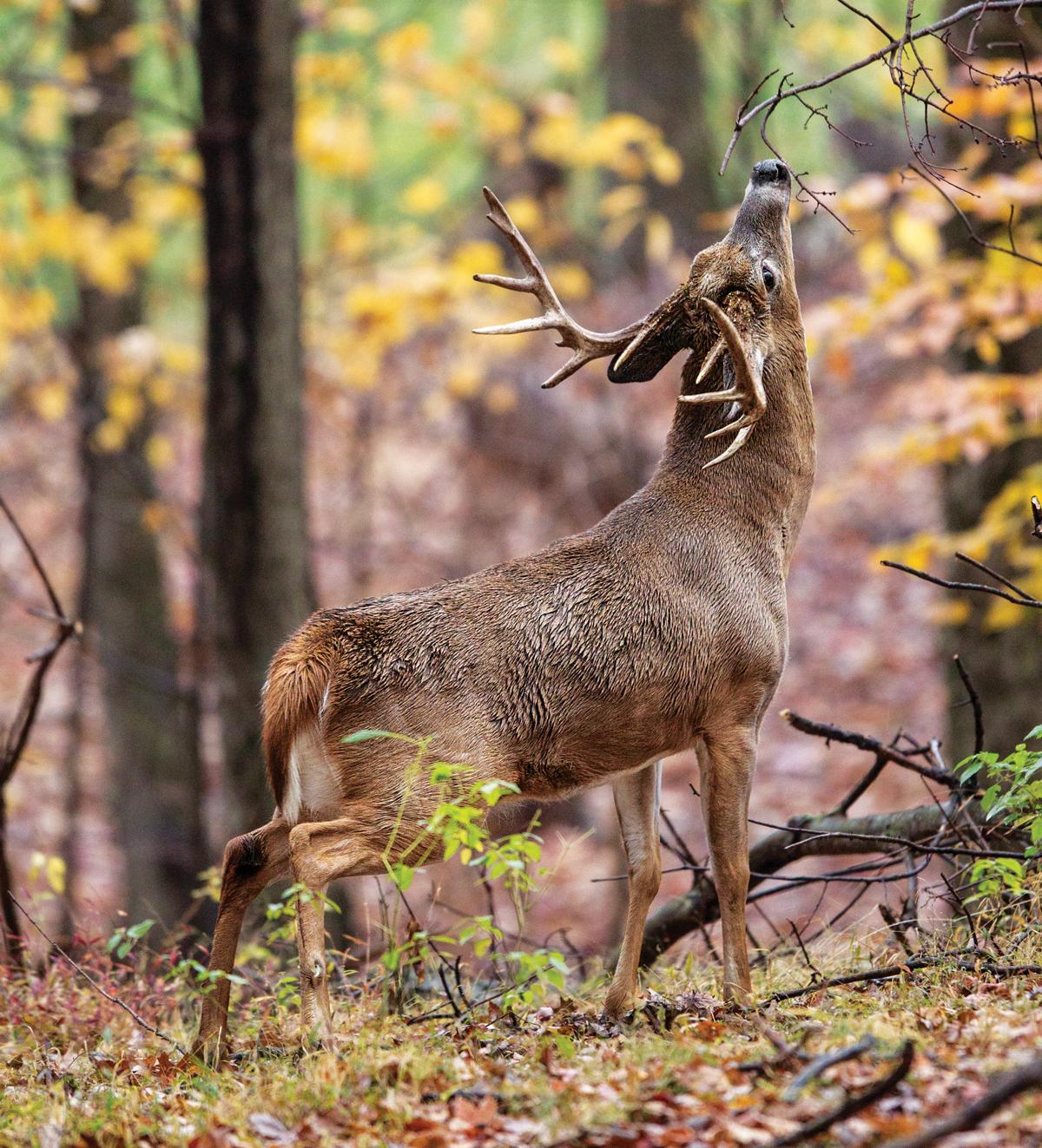 The Ultimate September Deer-Hunting Guide