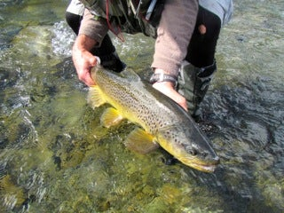 Five Tips for Fall Brown Trout