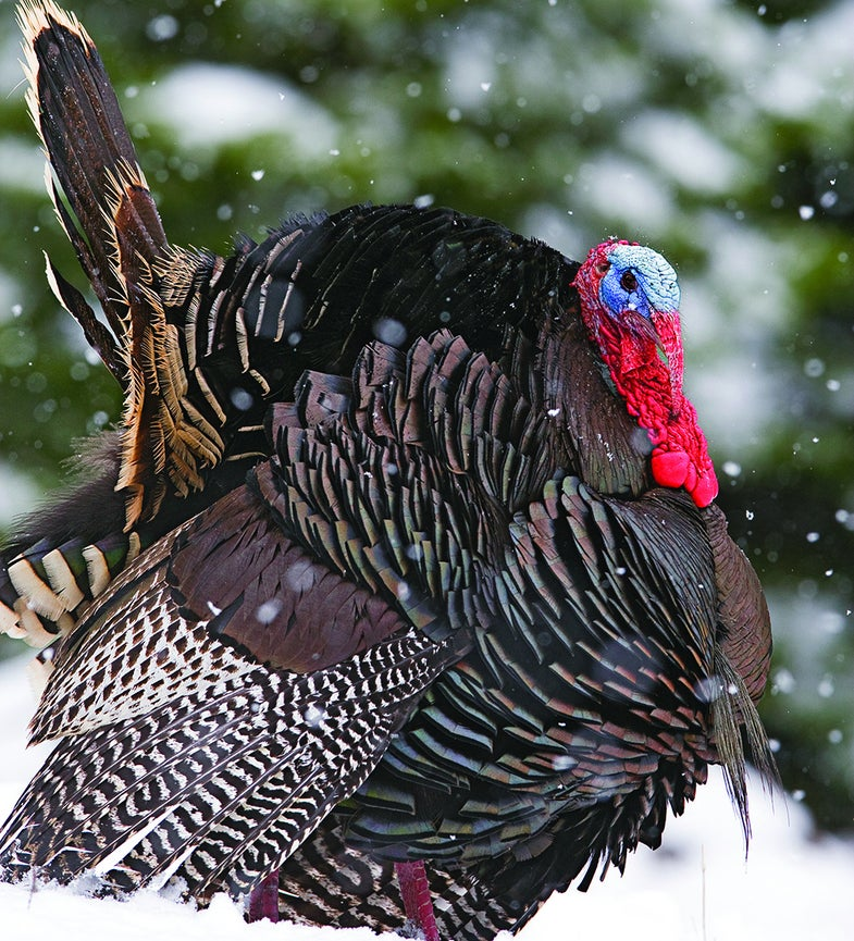 How to Hunt Early-Season Turkeys in Any Weather