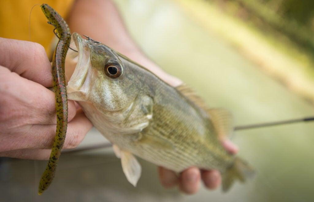 bass soft fishing