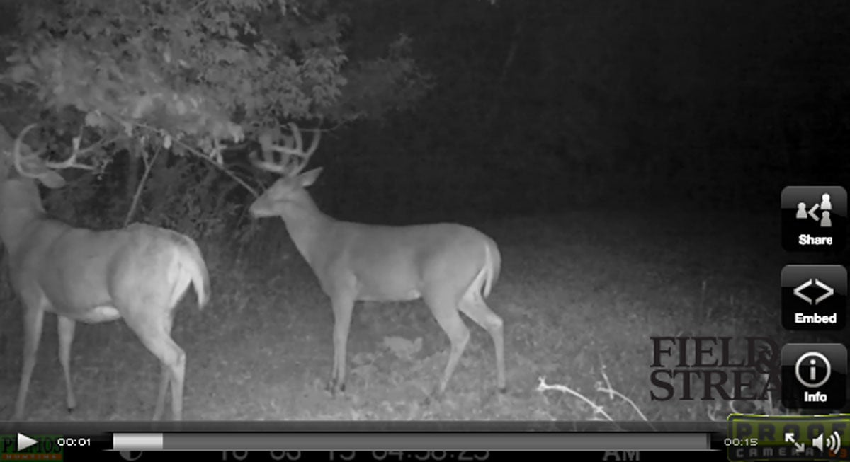 Video: Bucks in Flux and Hitting Mock Scrapes Hard