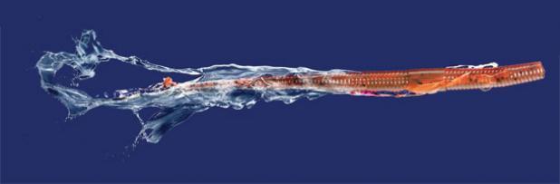 Gene tattletail worm