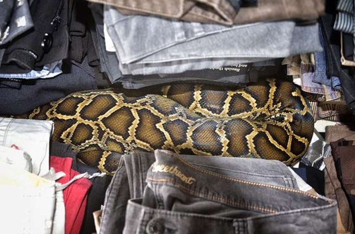 Seven-Foot Python Found Among Clothes at Florida Flea Market