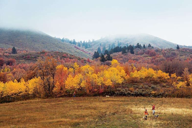 Idaho Uplands: The Great American Bird Hunt