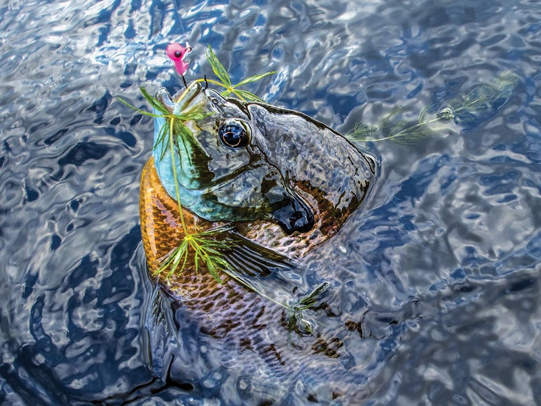 summer bluegill fishing