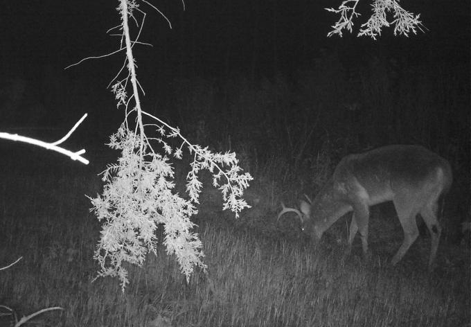 Bucks Are Still Running in South Carolina