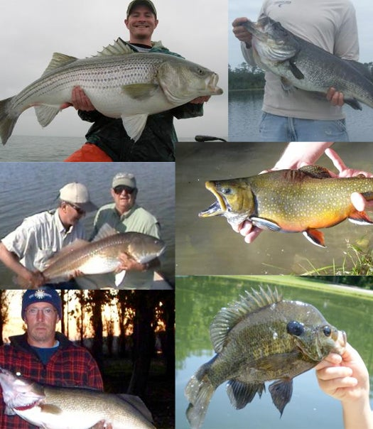 2009 Online Fishing Contest Category Winners
