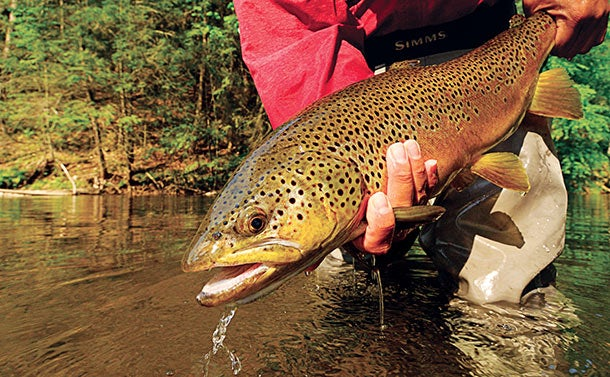 Secrets for Catching Bigger Trout on Local Streams