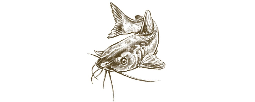 spring blue catfish