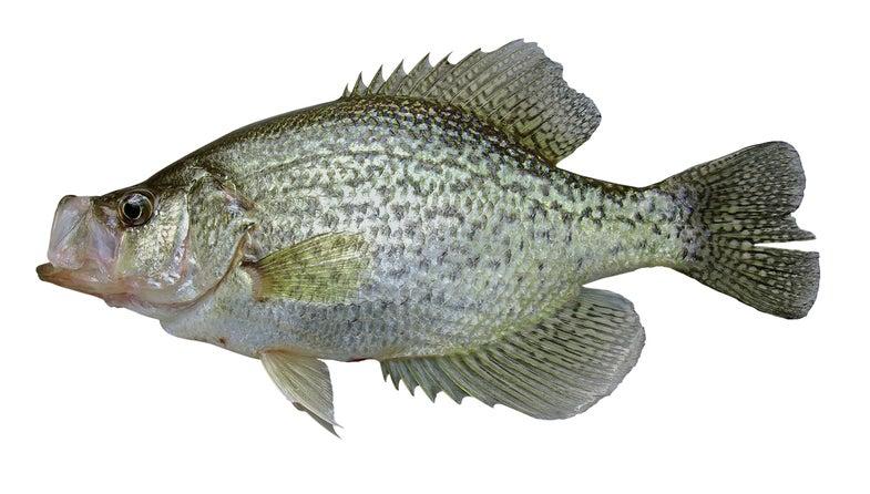 fall crappie fishing,