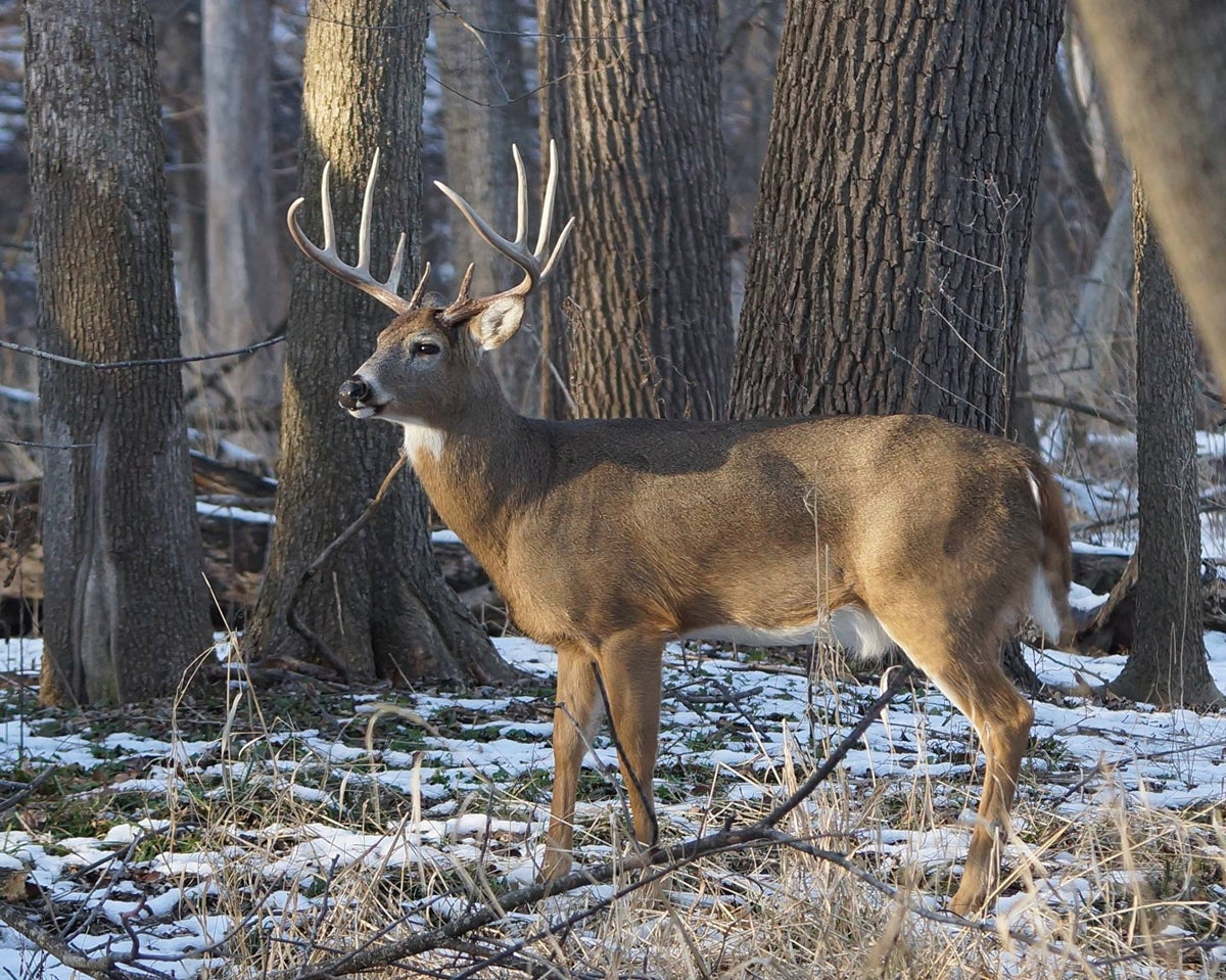 Wisconsin Poacher Kills 10-Point Buck in Suburban Park