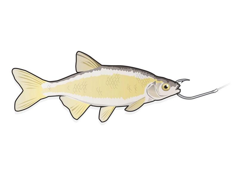 best bait rigs, best live bait, effective fishing bait