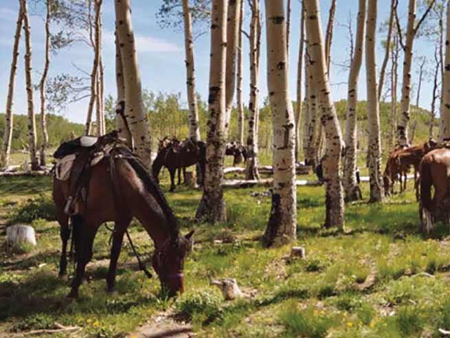 horses at hondoo rivers and trails