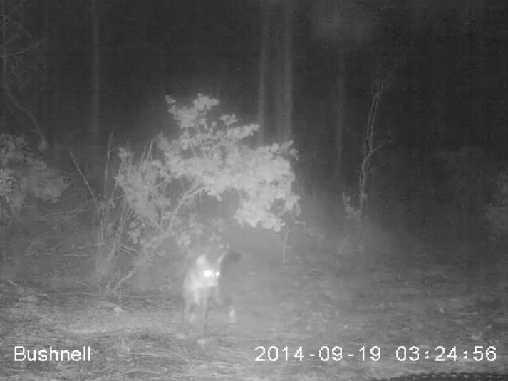Video: House Cat vs. Florida Keys Gator