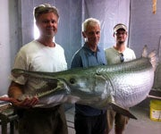 Alligator Gar Taxidermy: The Process of Sculpting a 300-Pound World Record