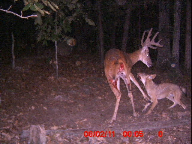 httpswww.fieldandstream.comsitesfieldandstream.comfilesimport2014importImage2011photo38356image005.jpg