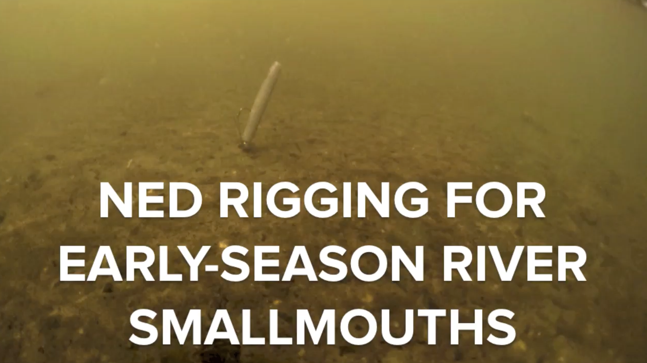 Video: Ned Rigging for Early-Season River Smallmouths