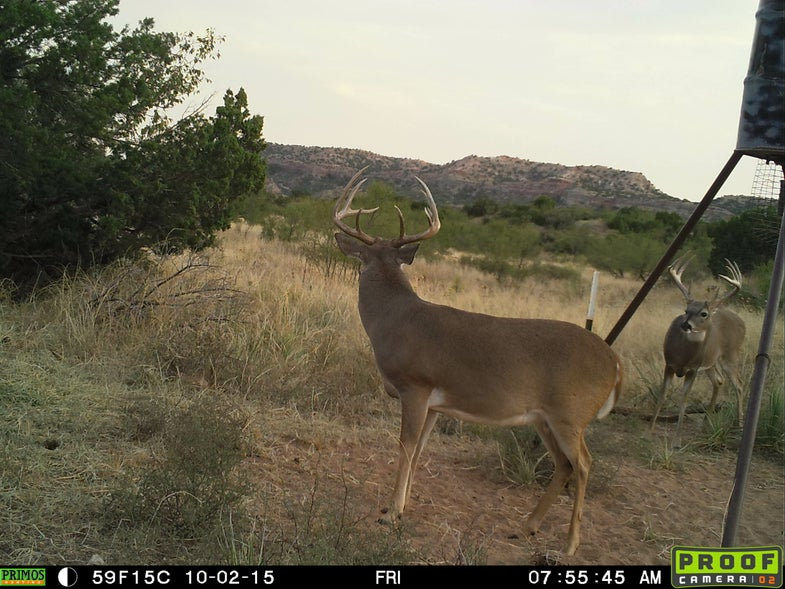 Mature Bucks Getting Ready to Wander, So Stay Patient