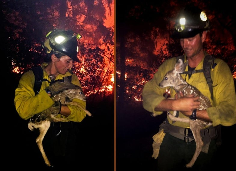 firefighters rescue fawns from flames