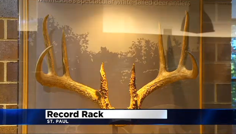 Minnesota DNR Puts Record Rack (That Was Poached) On Display