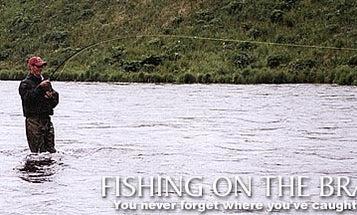 Fishing on the Brain