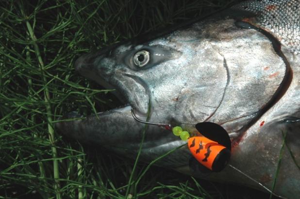 httpswww.fieldandstream.comsitesfieldandstream.comfilesimport2014importBlogPostembedWC_Smoked_Salmon.jpg