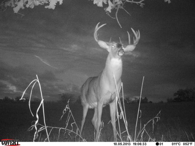 Best Shots from 2013 Fall Trail Cam Contest: Round 1