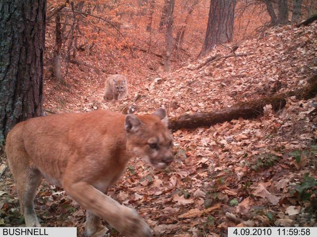 The 30 Best Photos From Our Spring Trail Cam Contest (Round II)