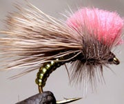 Tie Talk: Tying a Clown Shoe Caddis in 7 Steps (with Photos)