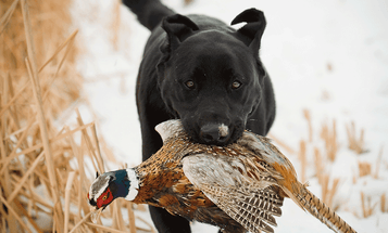 Hunting Rules: Always Believe the Dog